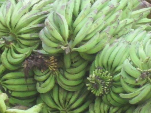 Dock bananas